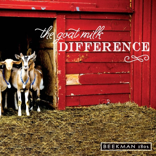 The Goat Milk Difference - Goats in a barn - Beekman 1802